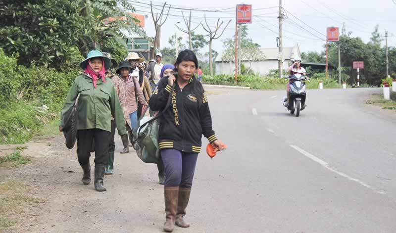 Nông dân gặp khó khăn trong thu hoạch cà phê do mưa kéo dài