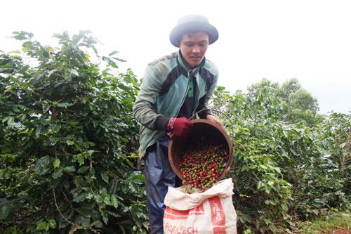 """Triết lý """"6 cây 2 con"""" đất nghèo Quảng Trị: Vực dậy cà phê Khe Sanh"""